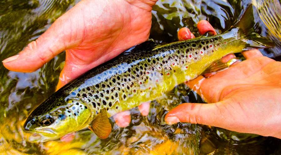 5 Fly Fishing Tips For The New Season