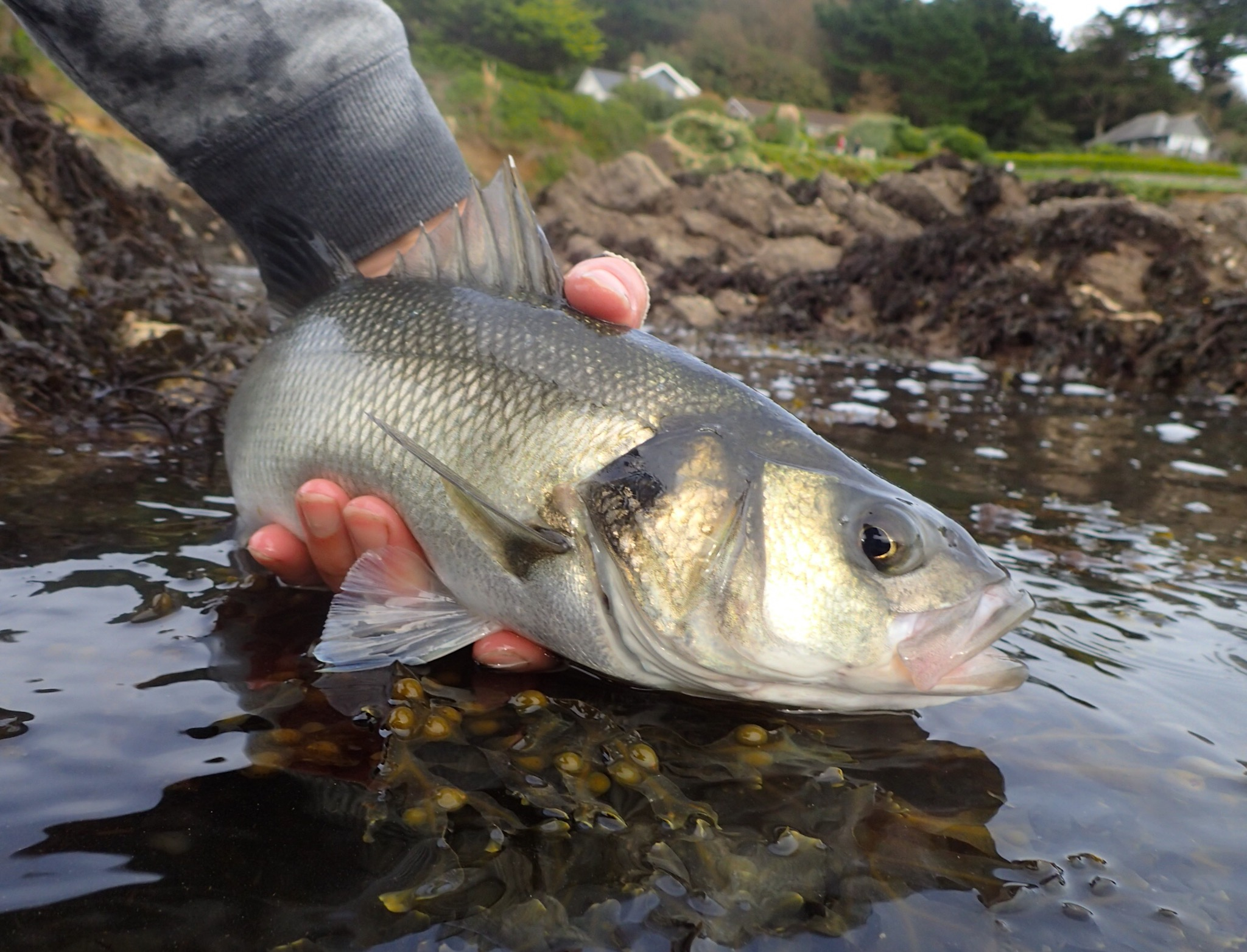 UK Saltwater Fly Fishing Festival Day 2