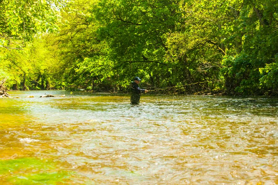 A client enjoying a fly fishing lesson on our private Derbyshire river