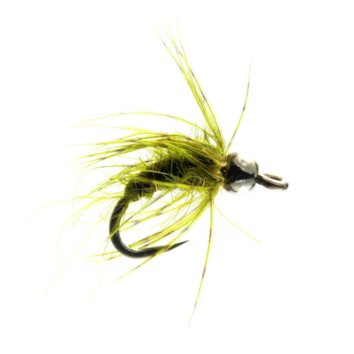 olive pupa tungsten