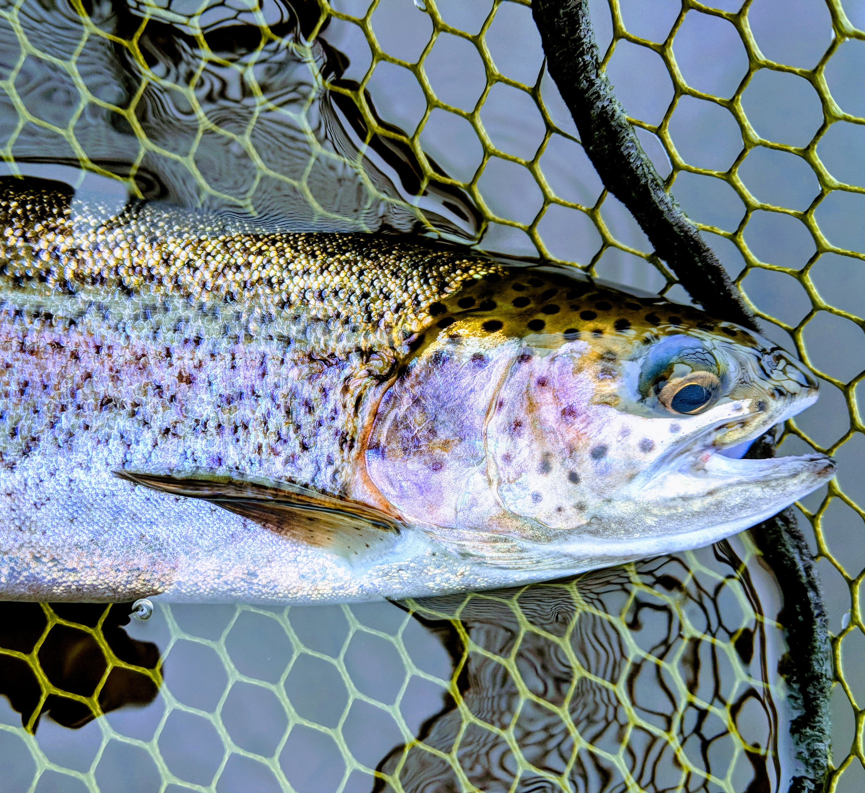 3 Fly Fishing Tips to Catch More Fish!
