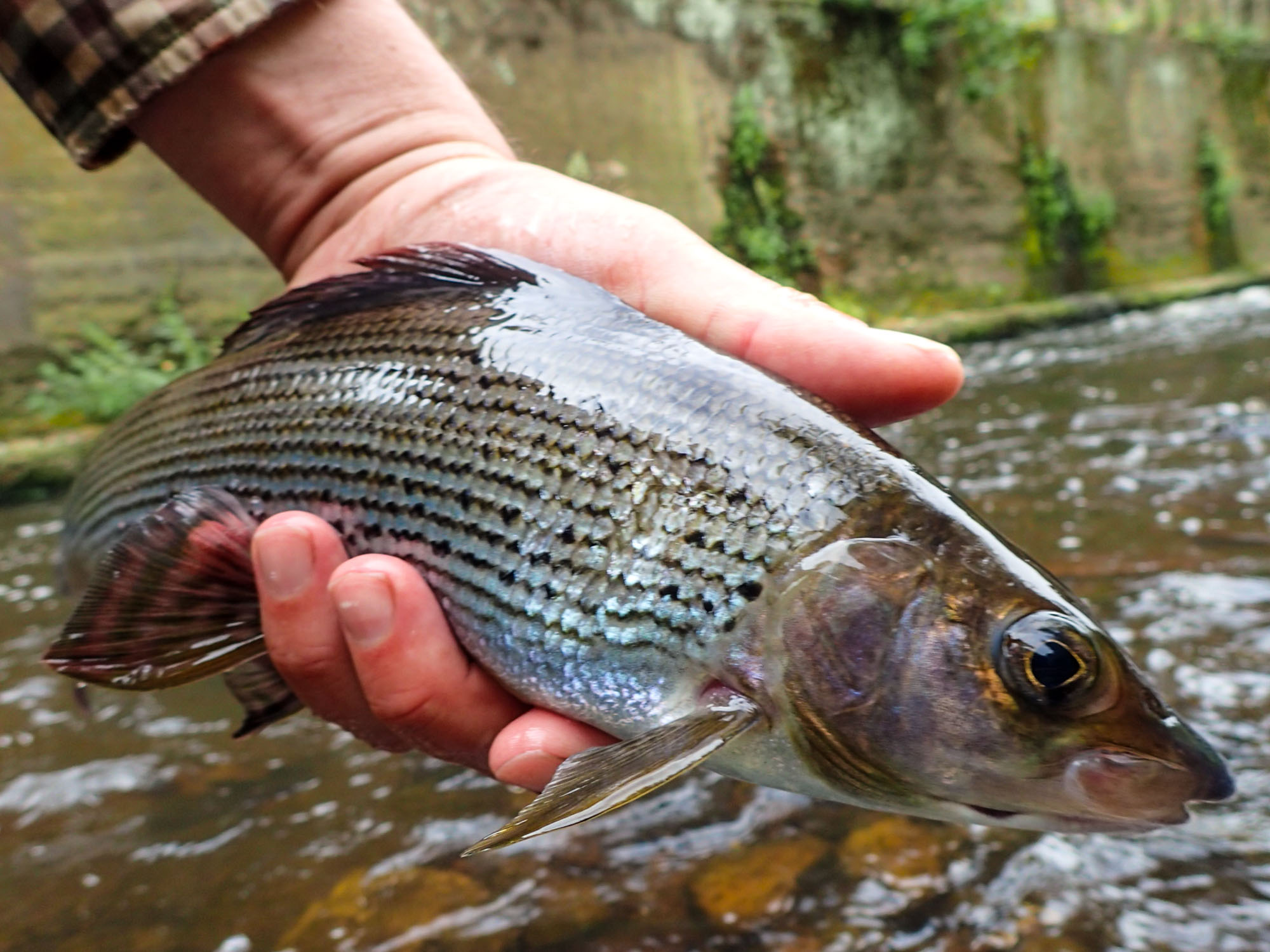 5 Superb Grayling Flies That Catch Fish