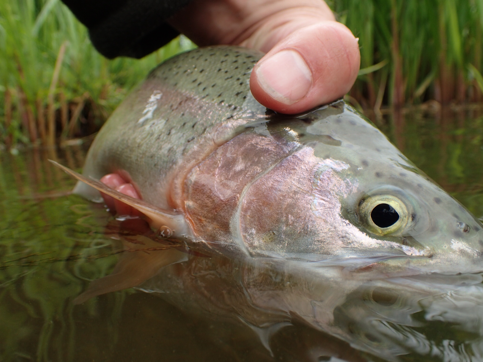 5 Great Winter Flies For Small Stillwaters
