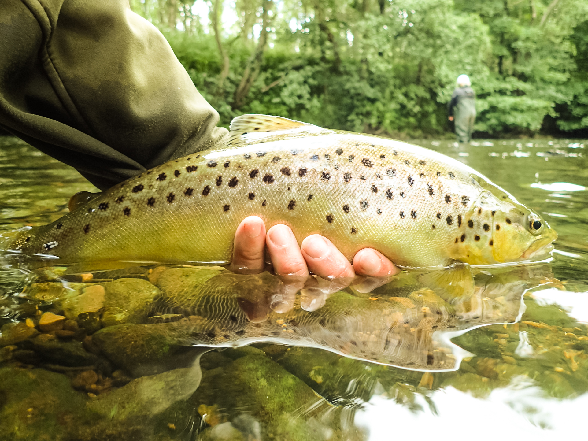 3 Ways For Fly Anglers To Get Their Fix At Home